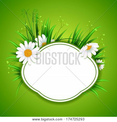 Spring banner with grass and chamomile flower frame vector illustration. Realistic green spring design, chamomile, floral eco nature. Vector chamomile flower illustration. Bouquet of spring or summer chamomile flower.