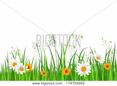 Green grass border with green grass isolated and chamomile flower on white background vector illustration. Realistic green grass design with shadow, eco nature green grass frame. Green grass concept. Vector landscape with green grass.