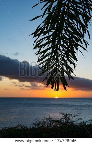 Romantic sunset tropical ocean palm trees - Curacao - paradise on the Earth