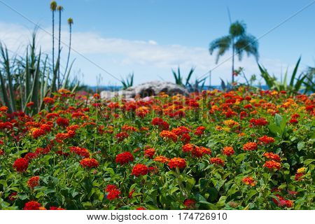Dream travel destination all year - Caribbean region, Curacao, blue sea and colorful flowers palm trees