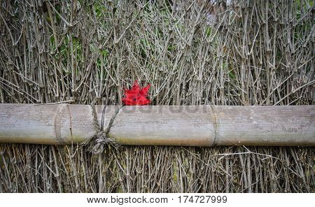 Bamboo Fence With A Maple Leaf