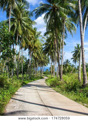 Tropical landscape with road and palm tree. Summer landscape with road through rural land. Exotic island travel panorama with sunny roadside. Tourism and vacation banner template with place for text