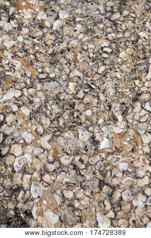 Shell carcass stuck on rocks in sea