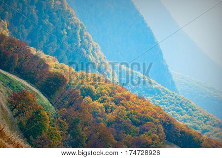 Beautiful red forest on a hills of foggy mountain valley