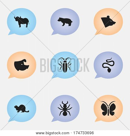 Set Of 9 Editable Animal Icons. Includes Symbols Such As Grizzly, Bedbug, Polar Animal And More. Can Be Used For Web, Mobile, UI And Infographic Design.