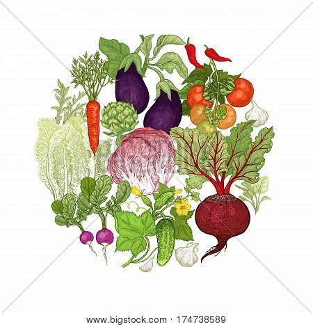 Color vegetables laid out in a circle. Vector illustration art. Beetroot, carrots, tomatoes, cucumbers, radishes, lettuce, garlic, eggplant, artichoke on white background. Vintage hand drawing plants
