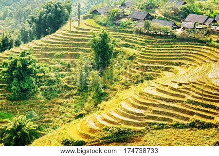 View Of Rice Terraces And Small Village At Highlands Of Vietnam