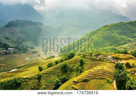 Sunlit Green Rice Terraces At Highlands Of Sa Pa In Vietnam