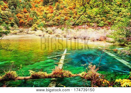 Amazing Lake With Clear Azure Water In Autumn Forest