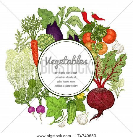 Vegetables Hand drawing with space for text. Vector illustration art set. Beetroot carrots tomatoes cucumbers radishes lettuce garlic eggplant artichoke on white background. Vintage plants