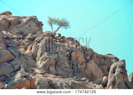 Lone shrub surviving in a an arid rocky landscape
