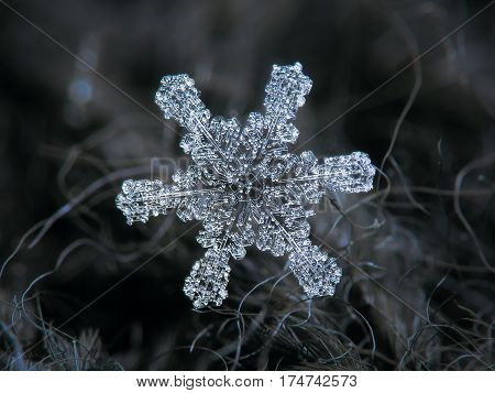 Macro photo of real snowflake: large snow crystal of stellar dendrite type with short, straight arms and big hexagonal center, completely covered by frozen bubbles of rime. Background: dark gray woolen fabric.