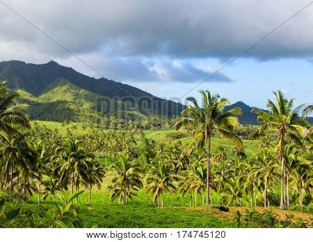 Tropical landscape with palm tree and mountain. Blue sky view with coco palm trees. Romantic image of palm tree leaves. Exotic landscape summer picture. Exotic island banner template or background