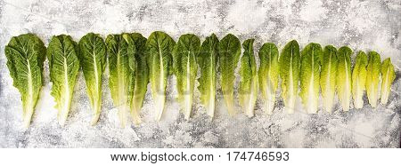 Raw Of Fresh Romain Lettuce Leaves From Big To Small