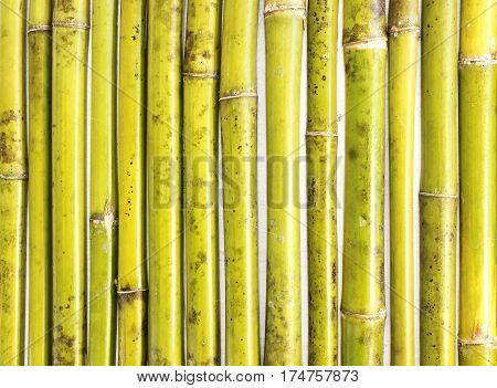 bamboo background; Textured background Natural bamboo fence.