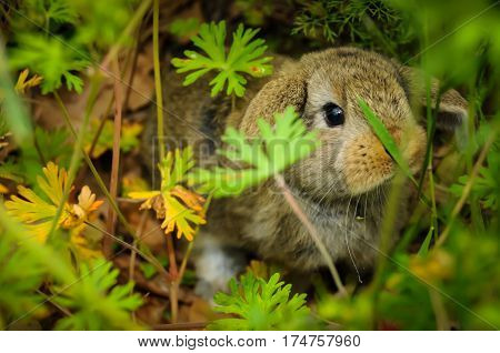 A brown rabbit hiding in the grass