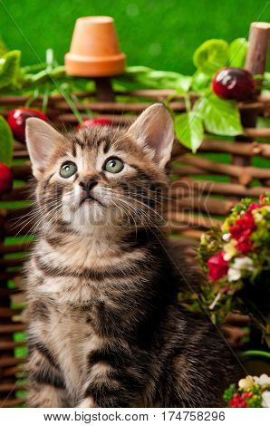 Cute little kitten near decorative wattle fence over the bright grass background