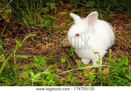 A white rabbit walking around in the field