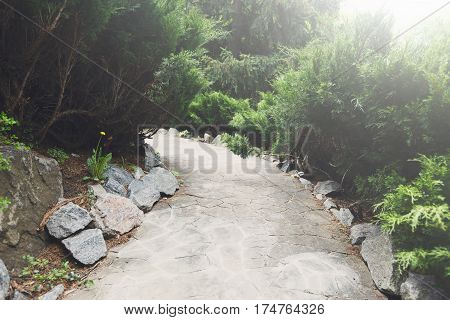 Beautiful landscape design, south resort park. Garden path in stone tiles, evergreen bushes, fir trees, blue spruces and shrubs in sunlight. Modern landscaping. Flare effect