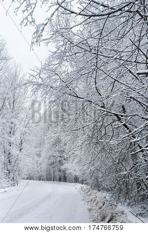 White branches at the edge of the road. Winter snow-covered forest species of wild nature.