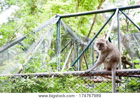 Monkey outside the cage on green background