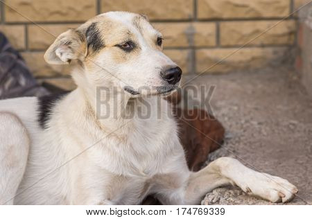Outdoor portrait of young mixed breed stray dog sitting on a street