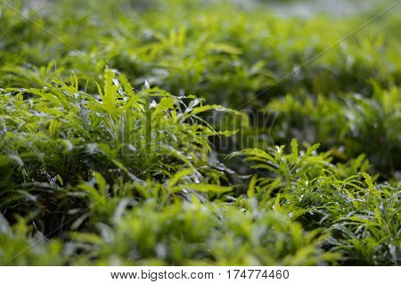 green leaf  , Green nature background and texture