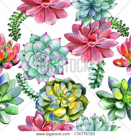 Wildflower succulentus flower pattern in a watercolor style isolated. Full name of the plant: succulentus. Aquarelle wild flower for background, texture, wrapper pattern, frame or border.