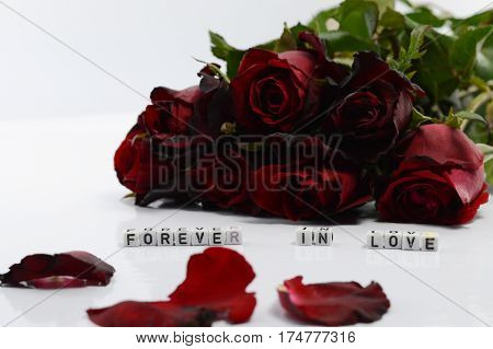 Red roses on a white background, For Valentine's Day