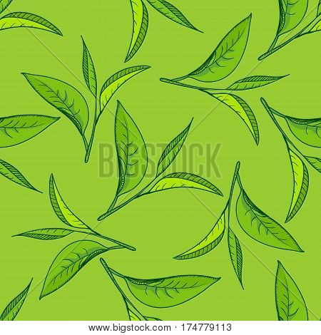 Seamless pattern with green tea leaves on green background. Hand painting on paper. May used in fabric, wrapping paper. Vector illustration