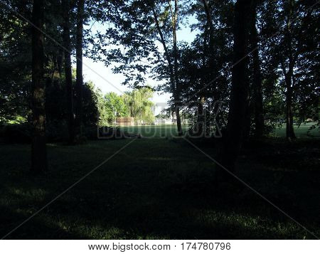 silhouette of backyard in summer at sunset