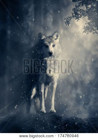 Wolf standing on a rock in the middle of the forest. 3D rendering.
