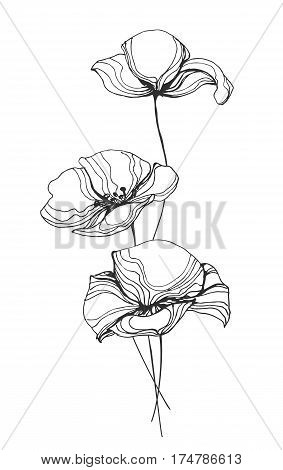 Field poppy flowers line art vector illustration isolated on white background. Remembrance poppies drawing drawn black outline. Floral template with wild flowers for prints, interior decoration