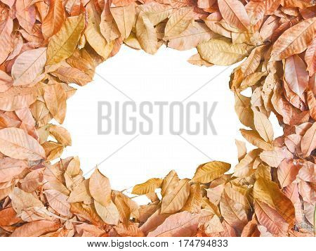 Autumn background with colorful dry leaves.Abstract seasonal greeting
