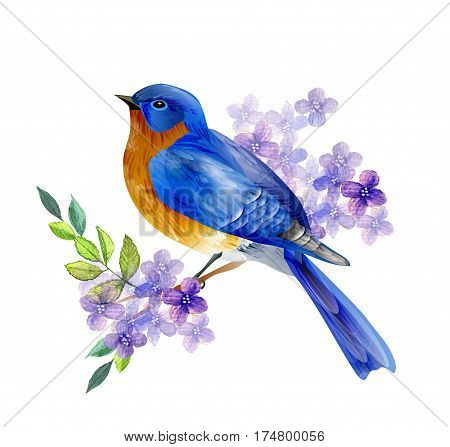 Bird of Spring eastern bluebird vector isolated background with spring flowers