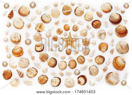 Pattern of shells and starfish in a spiral shape on white background. Flat lay top view