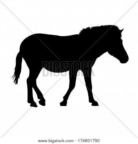 Walking Zebra - Silhouette - digitally hand drawn Vector Illustration