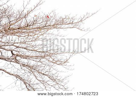 old branch no leave tree outdoor background isolted
