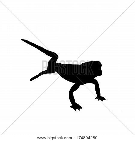 Desert Gecko - Silhouette - digitally hand drawn Vector Illustration