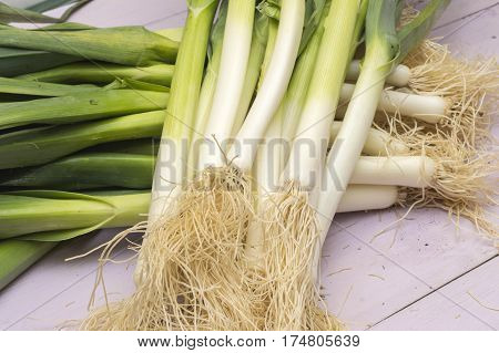 Bunch  of  leek with leaves, freshly harvested