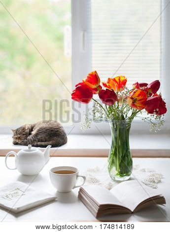 Spring mood. Time rest and tea, red tulips in a glass vase. Cat sleeping curled up on the window sill. Natural light from the windows. Spring artistic composition.