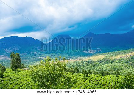 Beautiful Green Tea Plantations With Mountains, Clouds, Trees, Munnar, Kerala, India Travel Backgrou