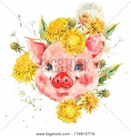 Cute piggy with spring flowers, yellow and white dandelions. Animal pig watercolor illustration. Easter spring hand painted art work isolated on white background