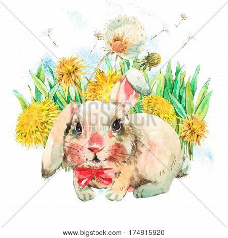 Cute white rabbit with red bow, spring flowers, yellow and white dandelions. Animal bunny watercolor illustration. Easter spring hand painted art work isolated on white background