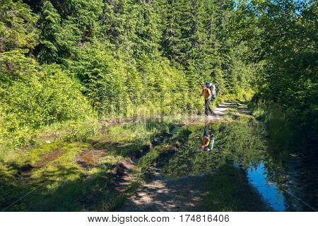 Hiker with backpack goes on a country road next to his reflection in a puddle. Sunny spring day in the forest after rain.