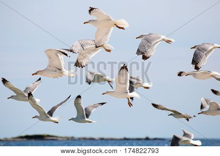 many flying sea-gulls at the blue sky