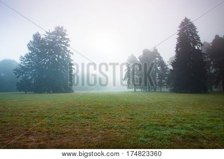 morning fog in the meadow among old spruce