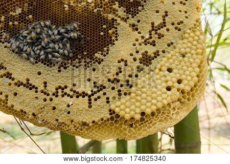 Beehive outdoors honeycomb with wild bees in the nature