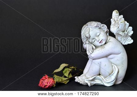 Angel and dead rose on dark background