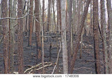 Kimo Recent Burn